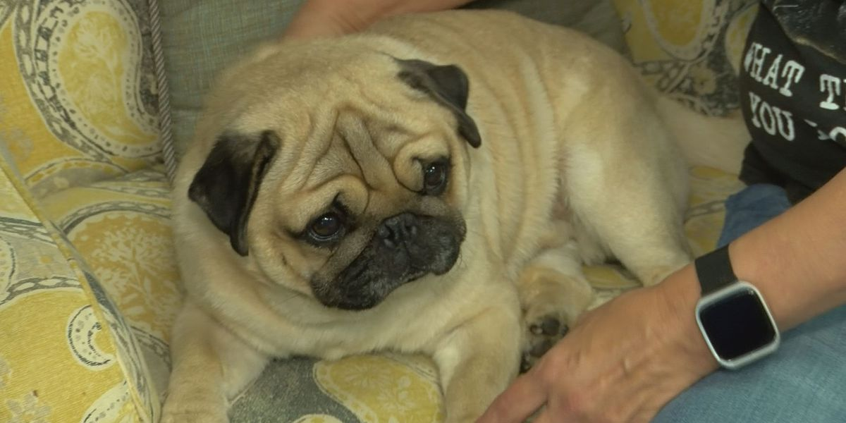 Reputable dog breeders offer tips to avoid buying from puppy mills