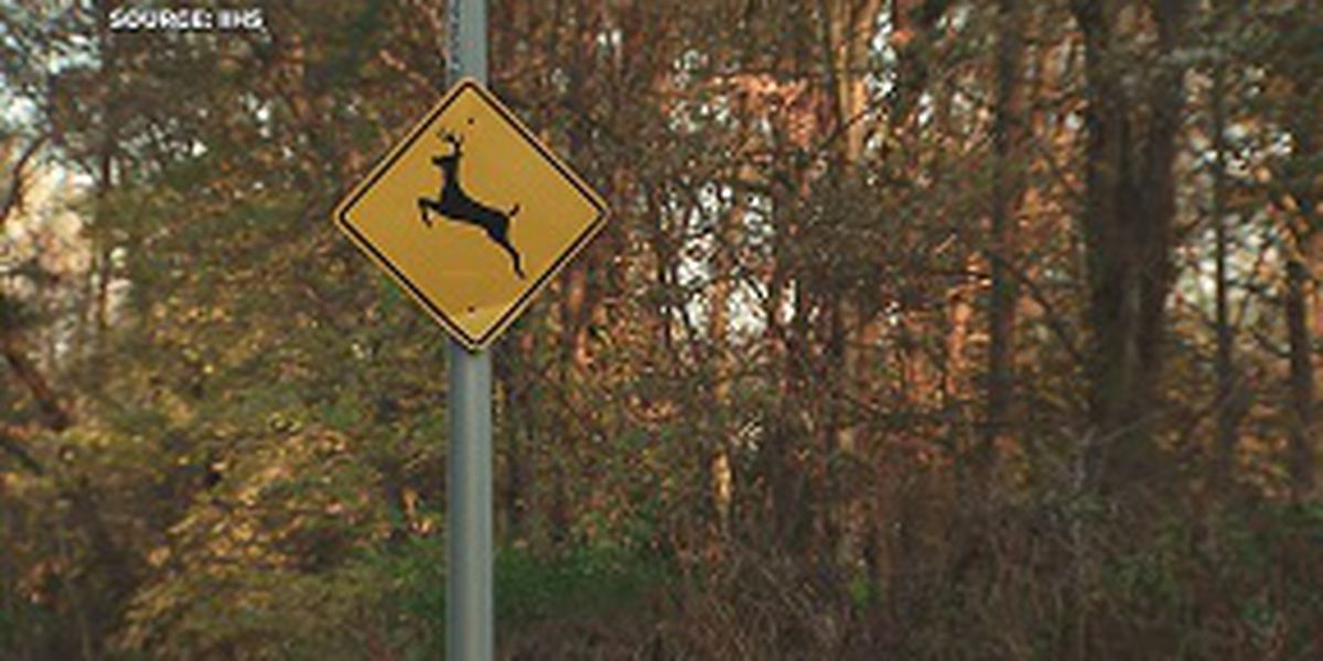 Drivers warned to be on the lookout for deer in Mississippi