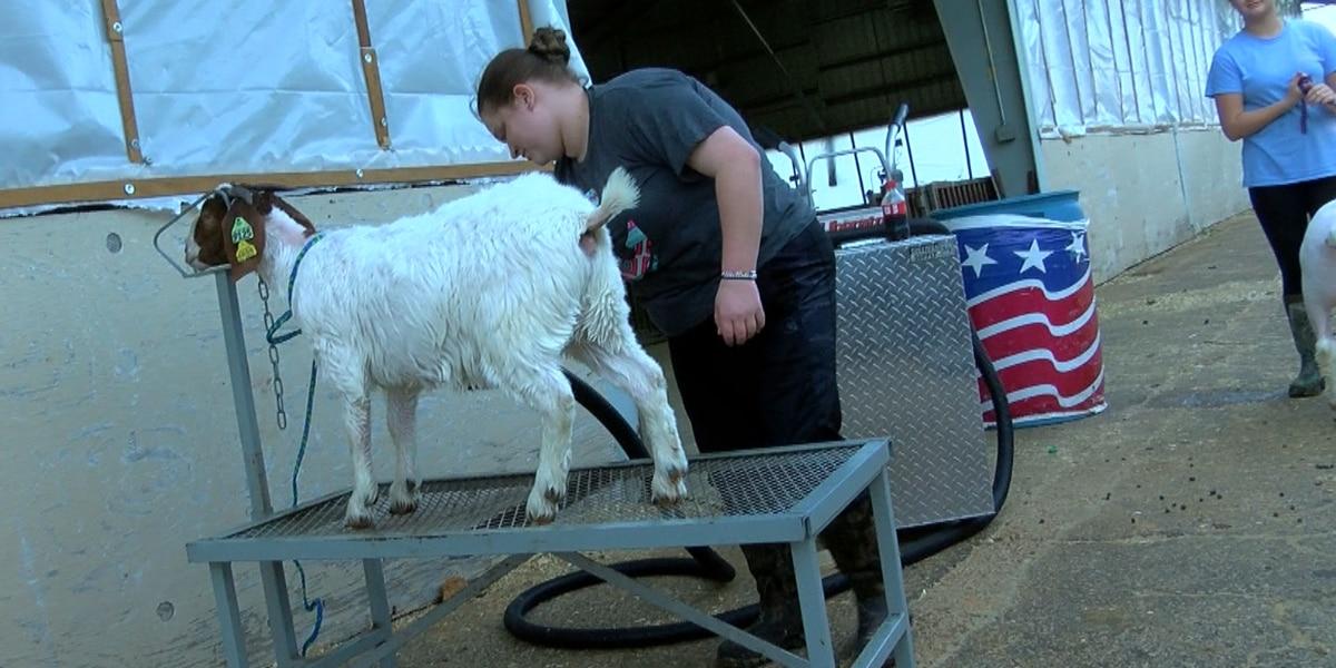 4-H preparing kids for more than raising farm animals