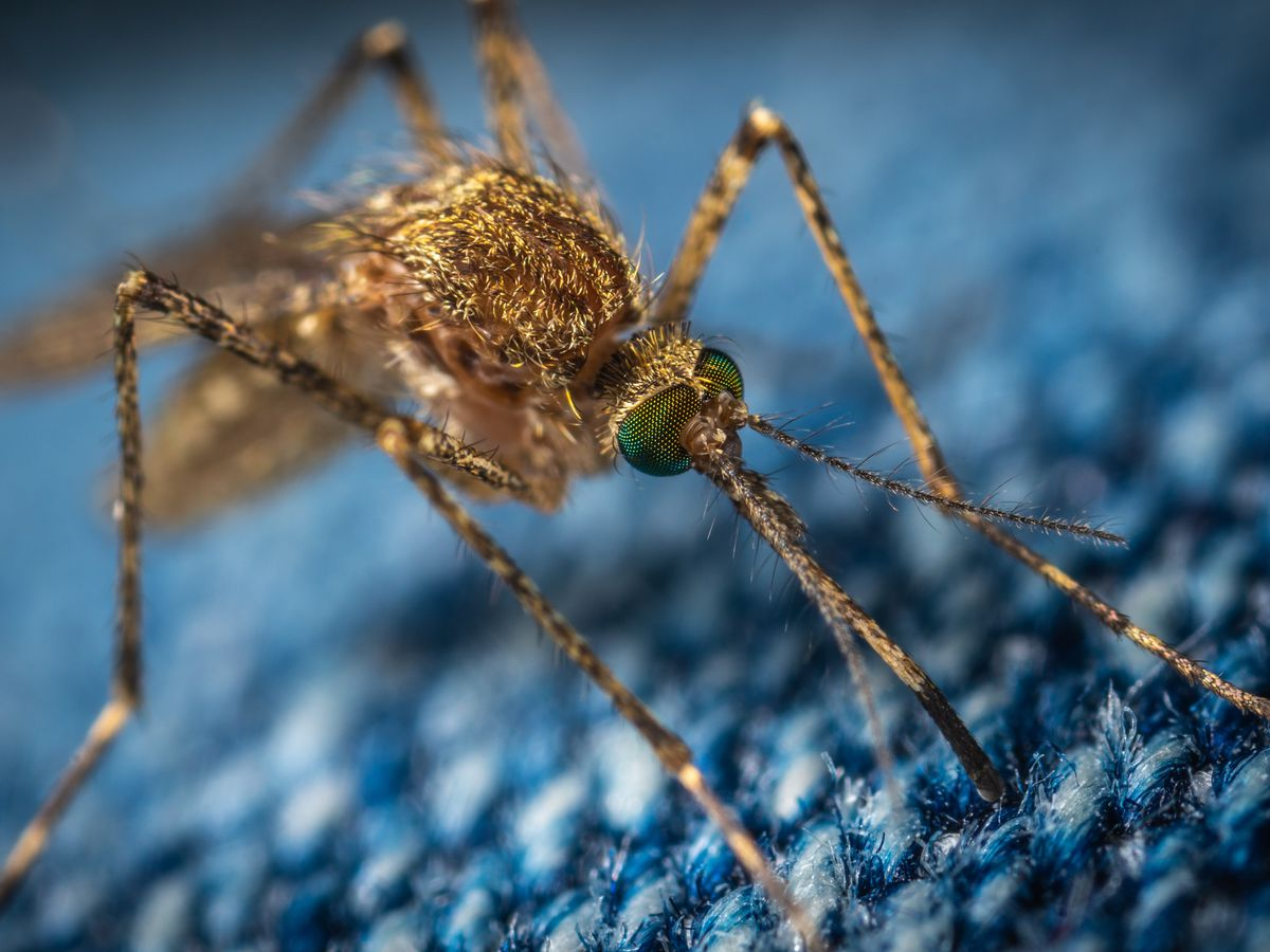 Two new reported cases of West Nile virus brings state total to 15