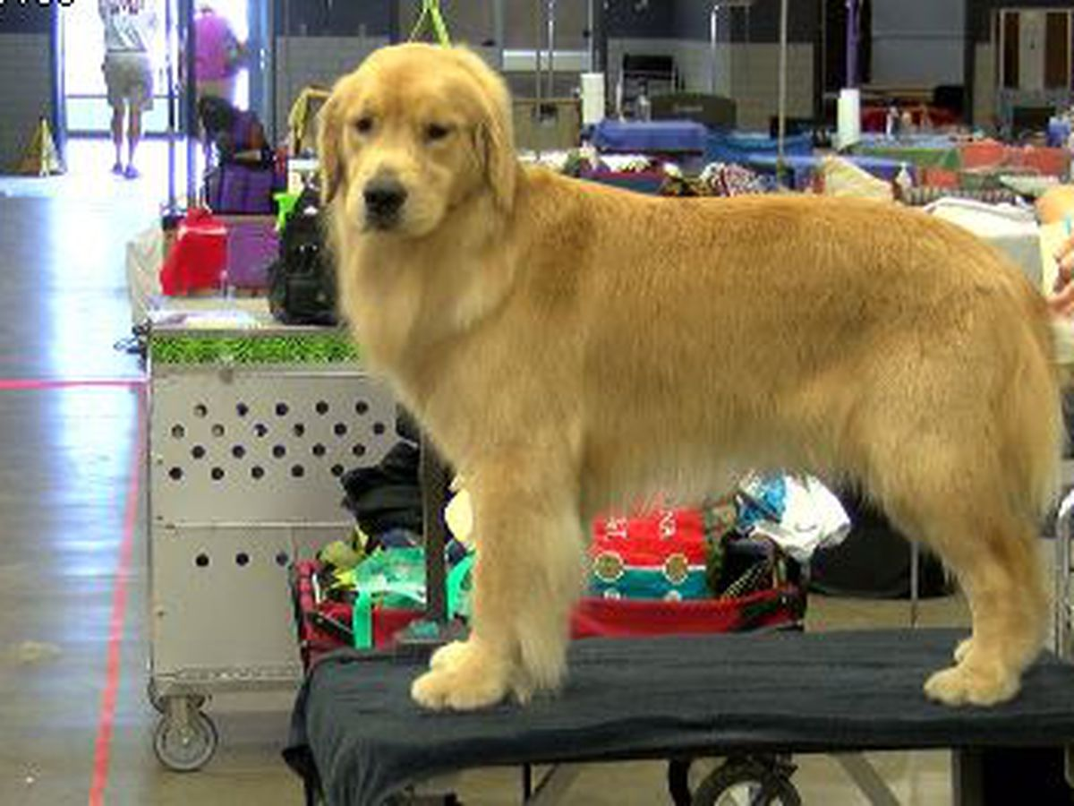 Dogs competing for Best in Show in Jackson