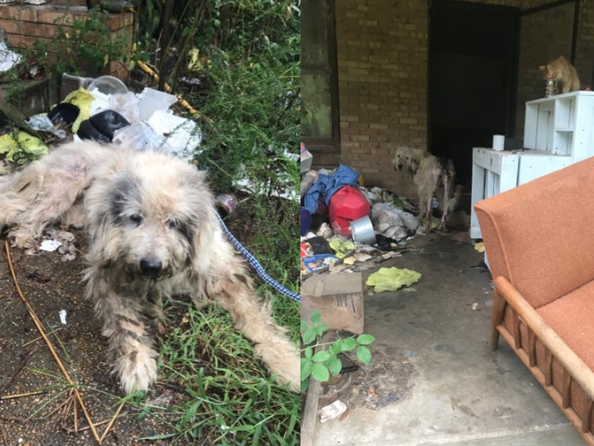Rescue saves two dogs found in horrific condition, abandoned at Florence home