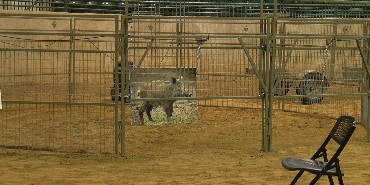 Dept. of Agriculture unveils Mississippi Wild Hog Control Program