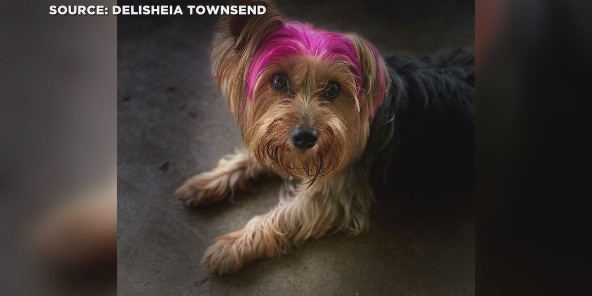 Dog owner confronts Ridgeland groomer after Yorkie goes missing during service