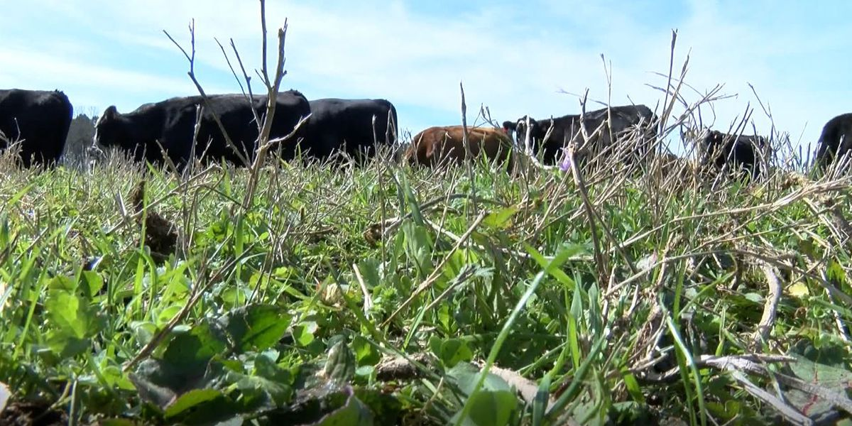 Suspects charged after theft investigation leads to recovery of cattle stolen from Benton County