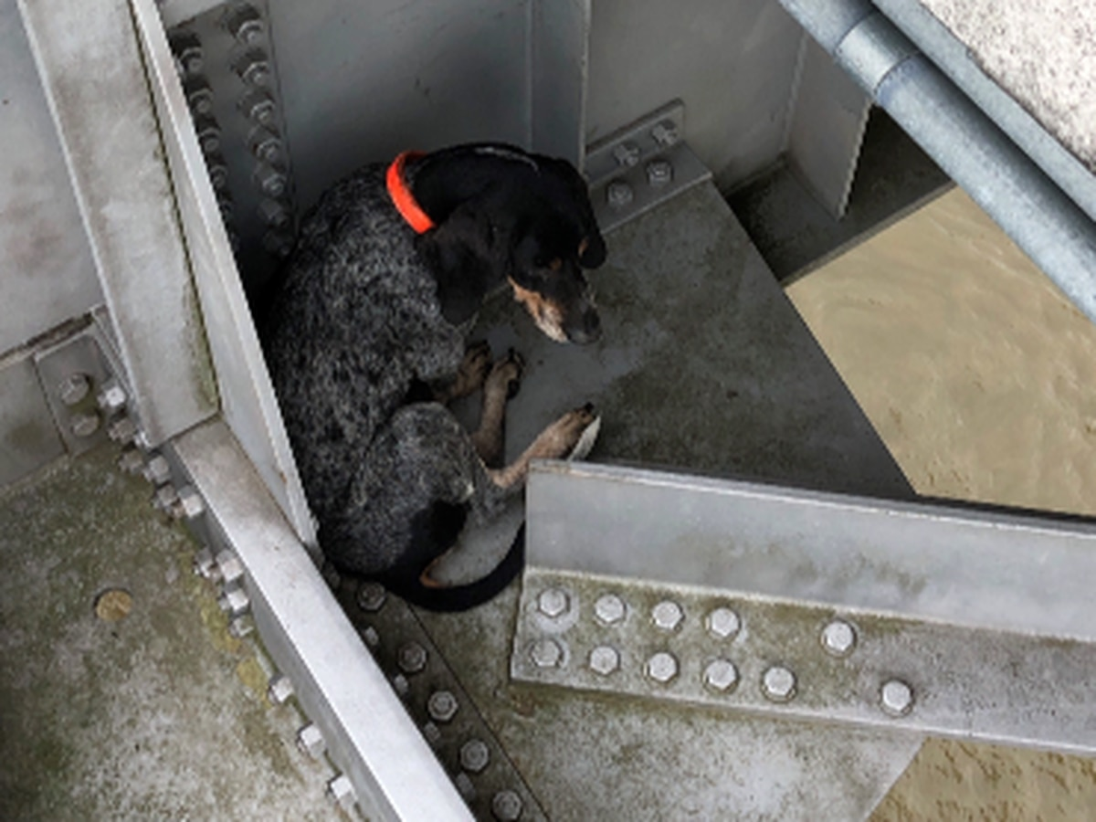 Dog rescued from Natchez bridge ledge now has new owner and new name