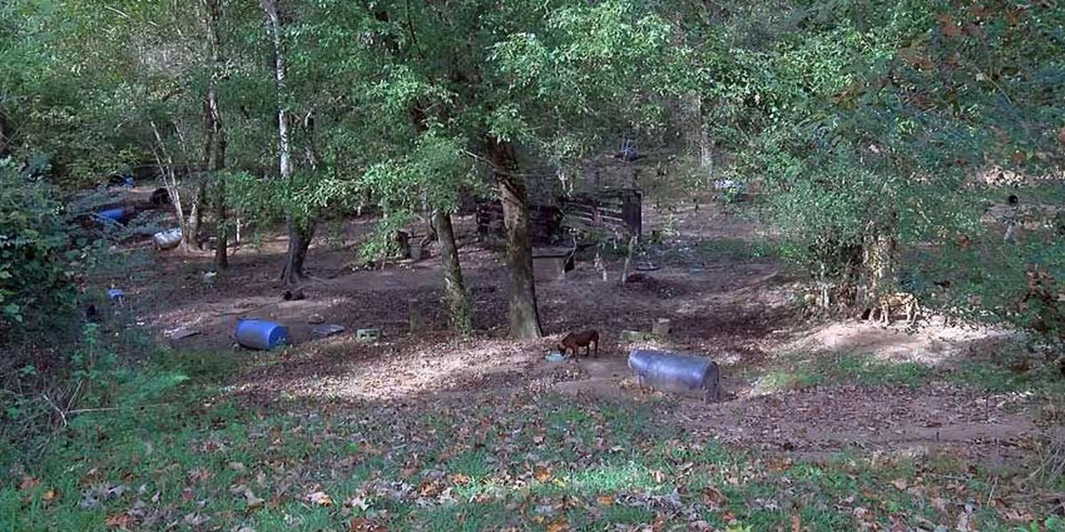 Adams Co. suspect charged with 50 counts of dog fighting, aggravated animal cruelty