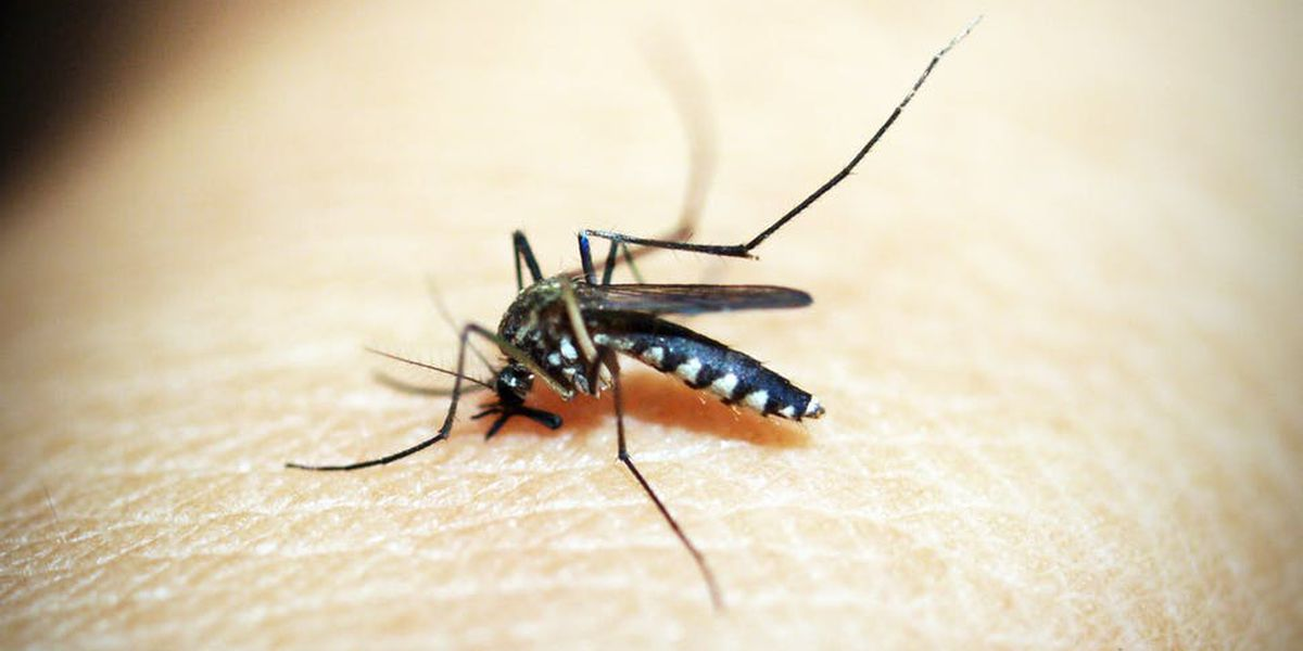 Mosquitoes in Peterborough test positive for West Nile virus, health unit reports