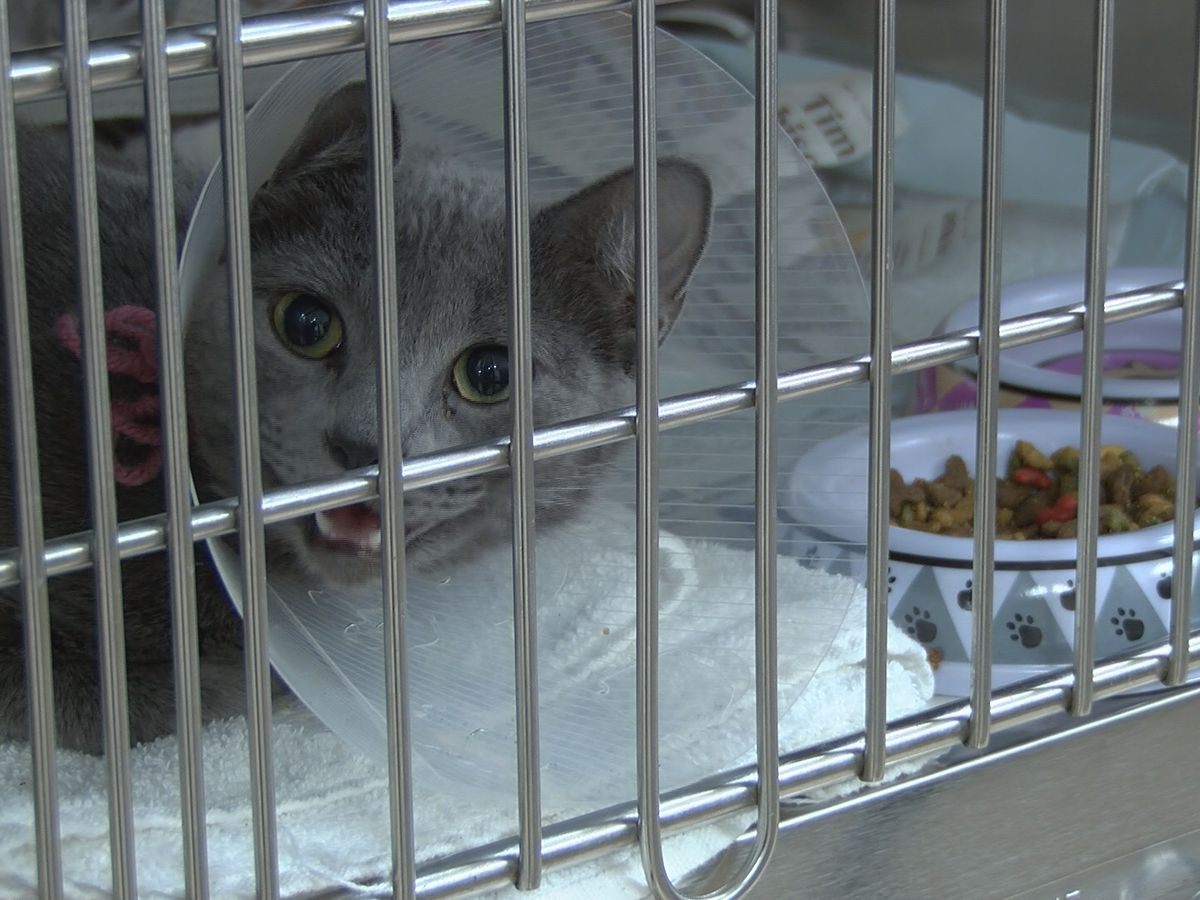 Miss. spay and neuter clinic handles dozens of appointments, reopens with new safety measures