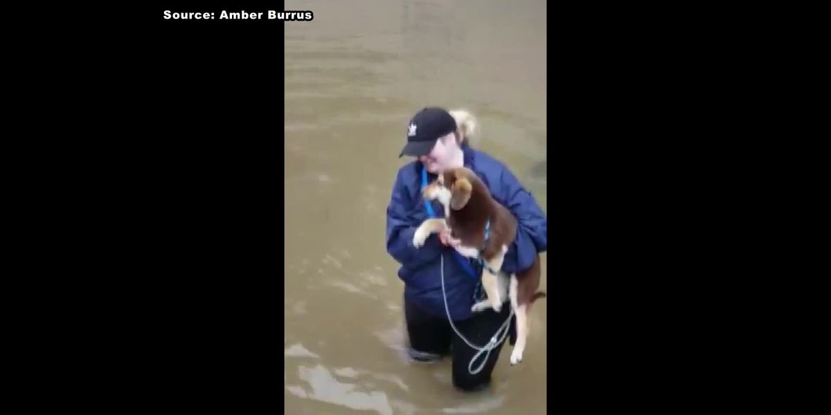 Puppies saved from rising flood water
