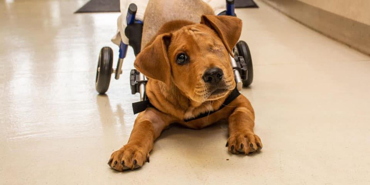 Puppy hit by Butler Co. train becomes community inspiration one year later