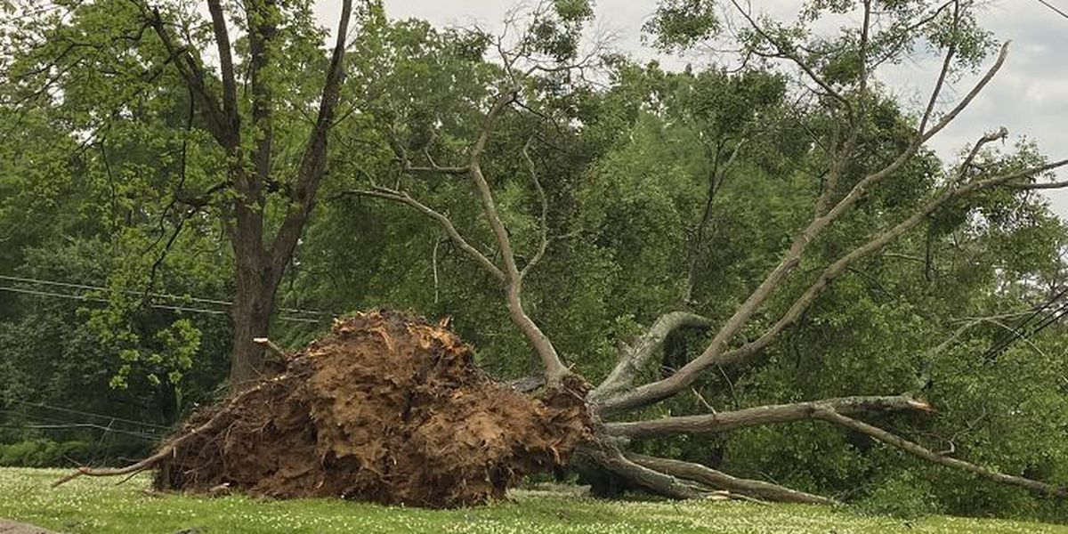 Survey concludes 3 tornadoes touched down during Tuesday storms