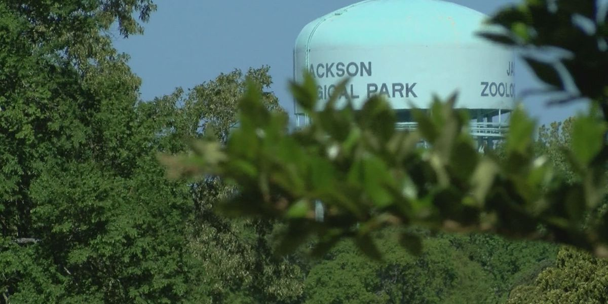 3 On Your Side investigation triggers in-depth audit of Jackson Zoo