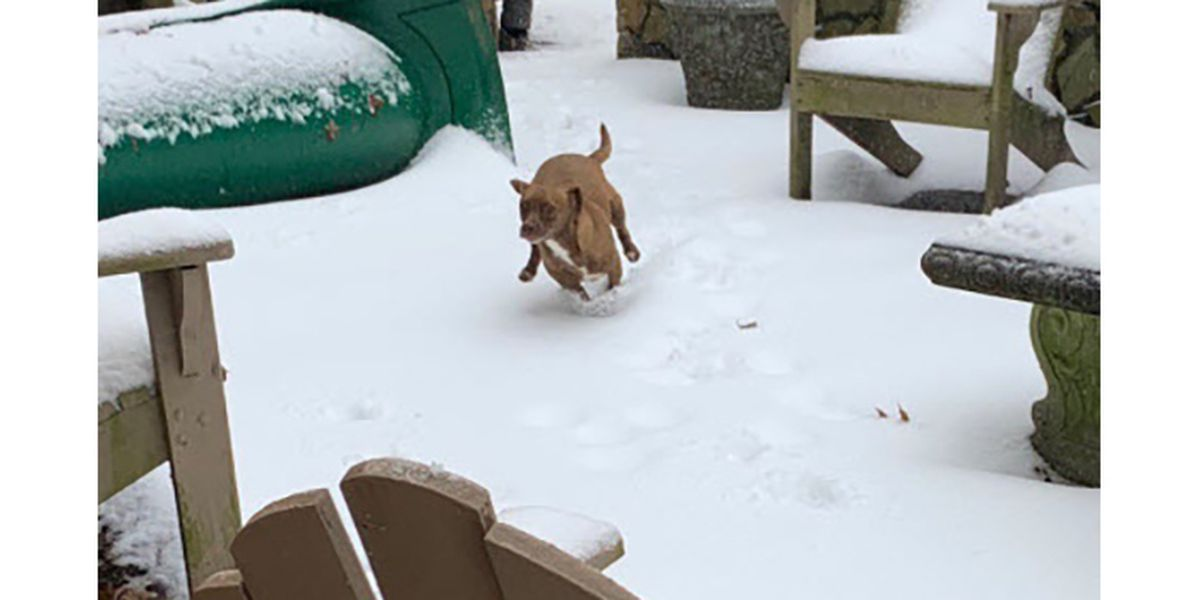10 winter weather tips for pets