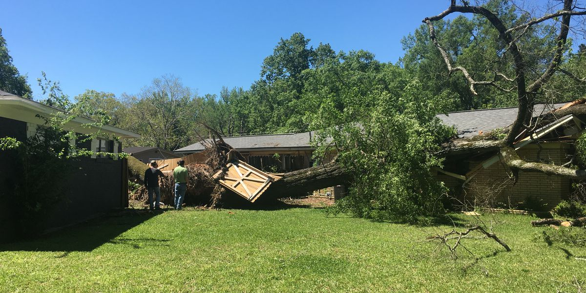 Pearl recovers after weekend storms down trees and bring more flooding