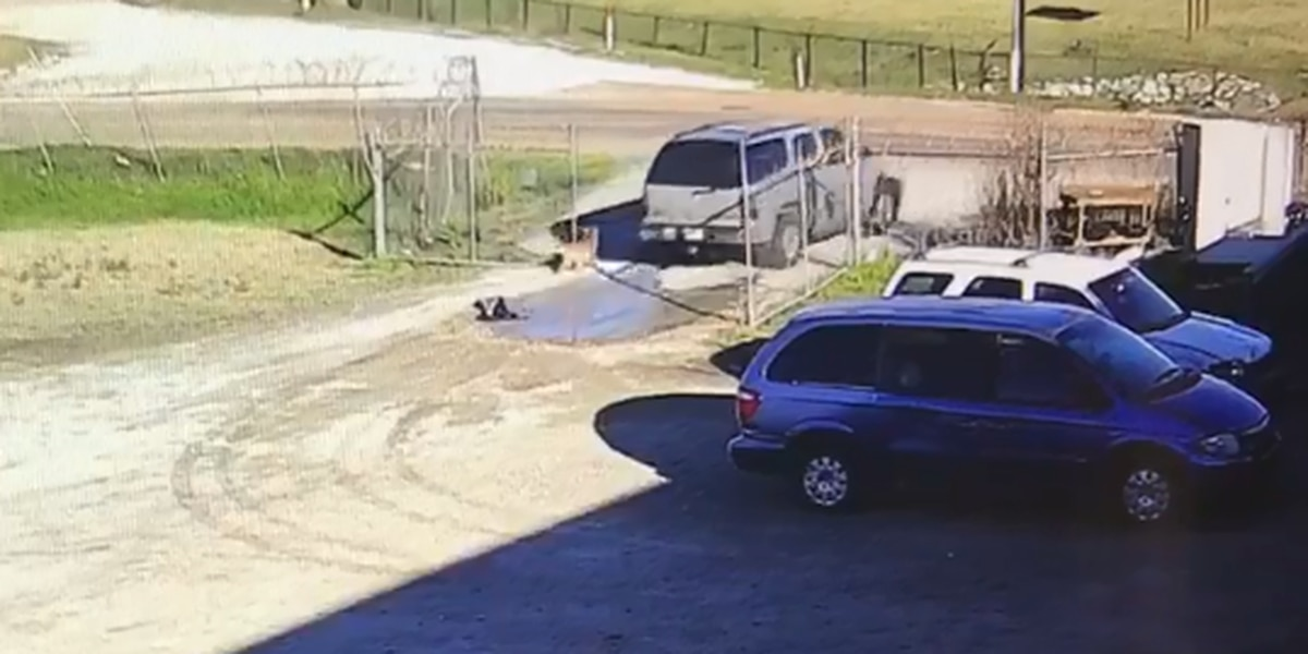 HEARTBREAKING VIDEO: Dog runs after SUV that dumps him at MS animal shelter