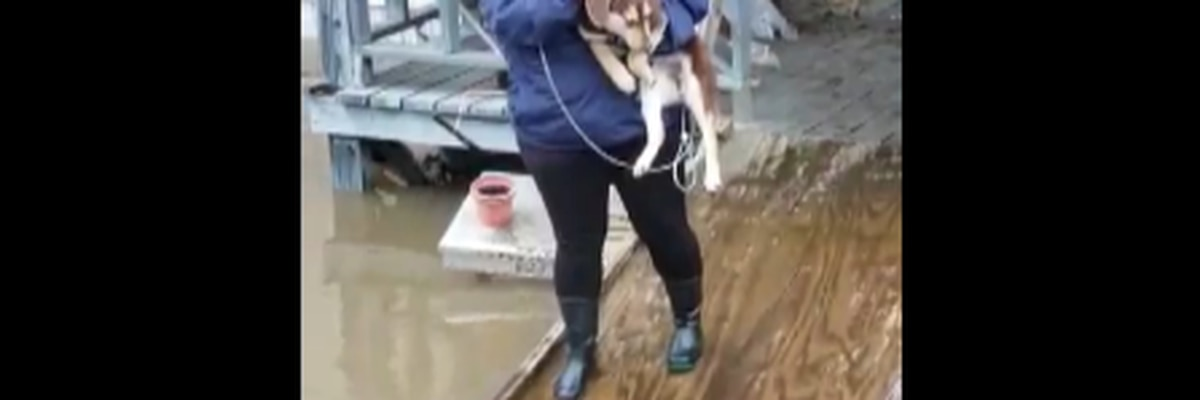 VIDEO: Puppies stranded on porch rescued from flood waters