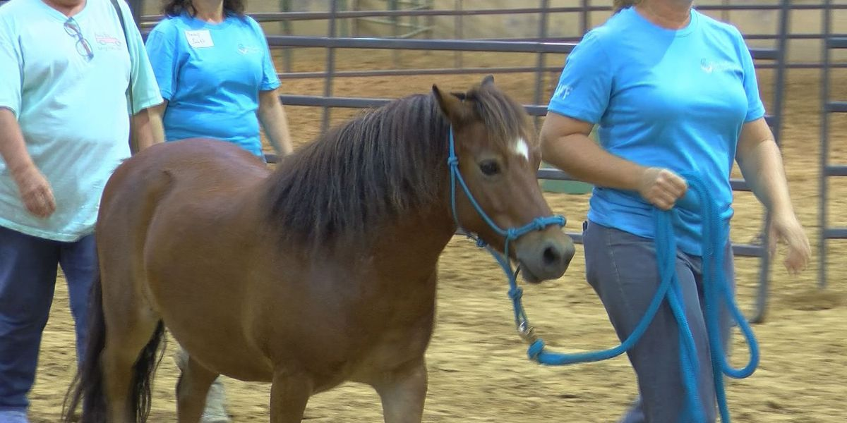 Rehabilitated horses given new homes and new hope at Jackson auction