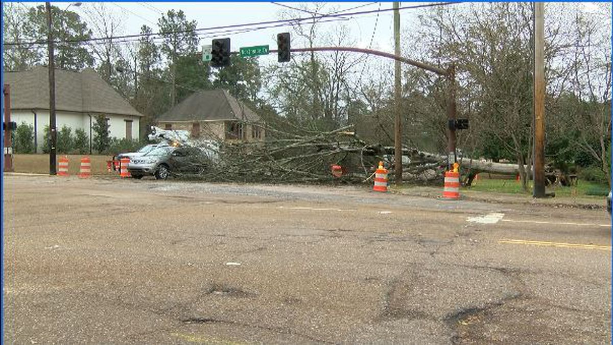 Fallen tree stalls traffic at intersection