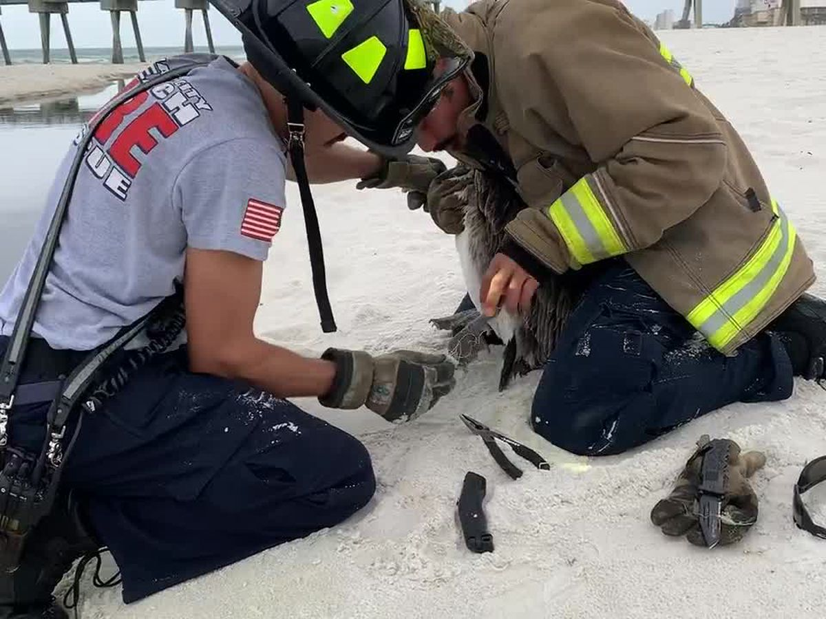 Firefighters rescue pelican entangled in fishing line and hooks