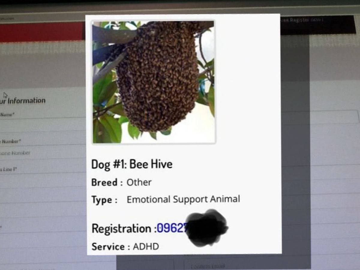 Arizona man registers beehive as service animal