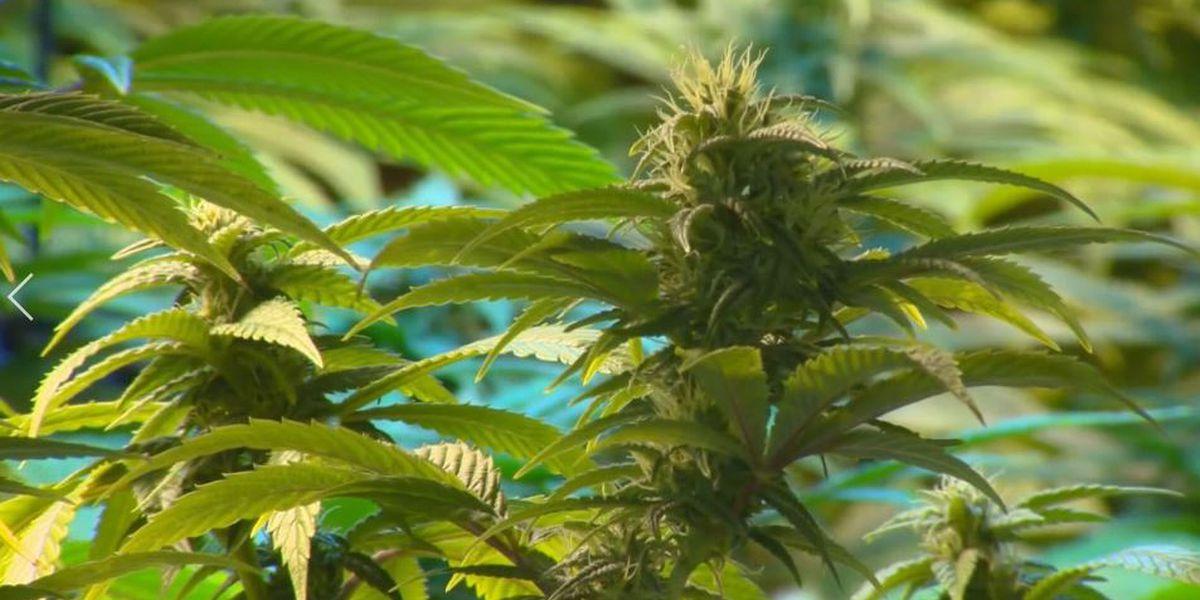 Senate revives medical marijuana proposal after House allows original bill to die