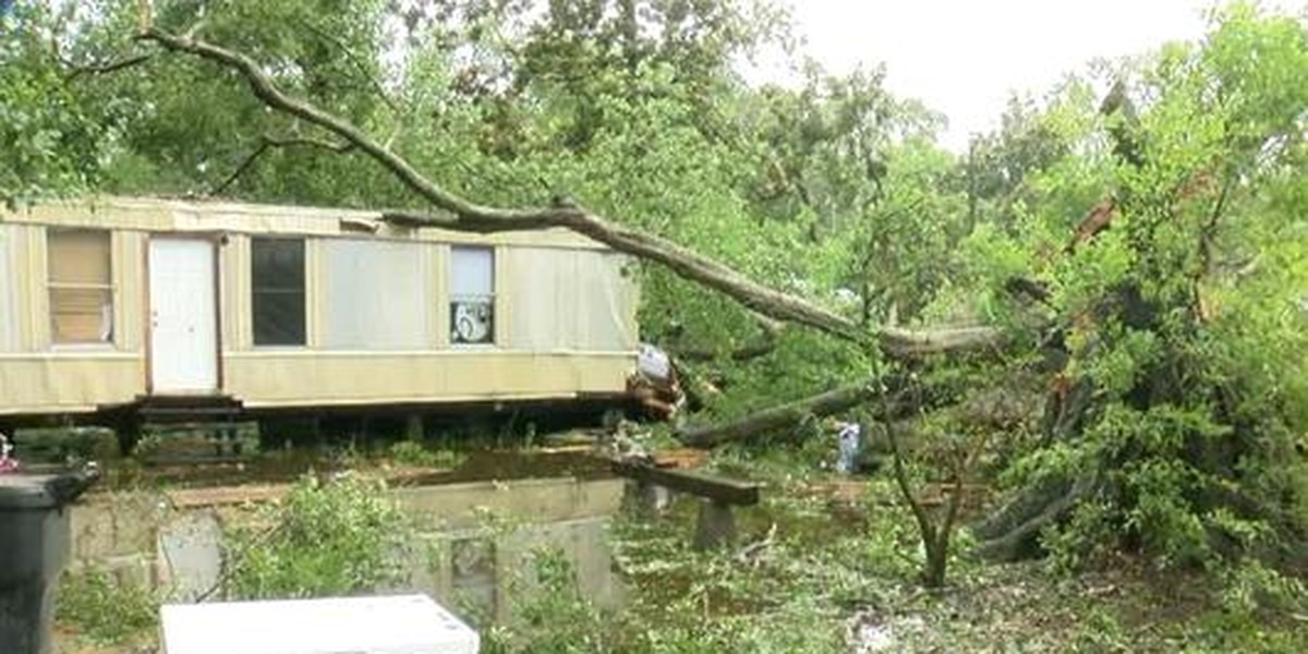 Bee-infested tree falls on family's home during Hurricane Barry