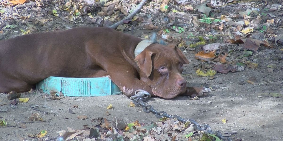 Adams County man convicted on multiple dog fighting charges