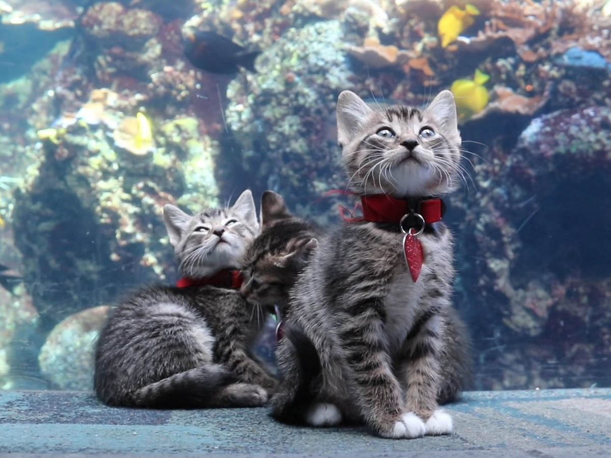 Kittens take over Georgia Aquarium