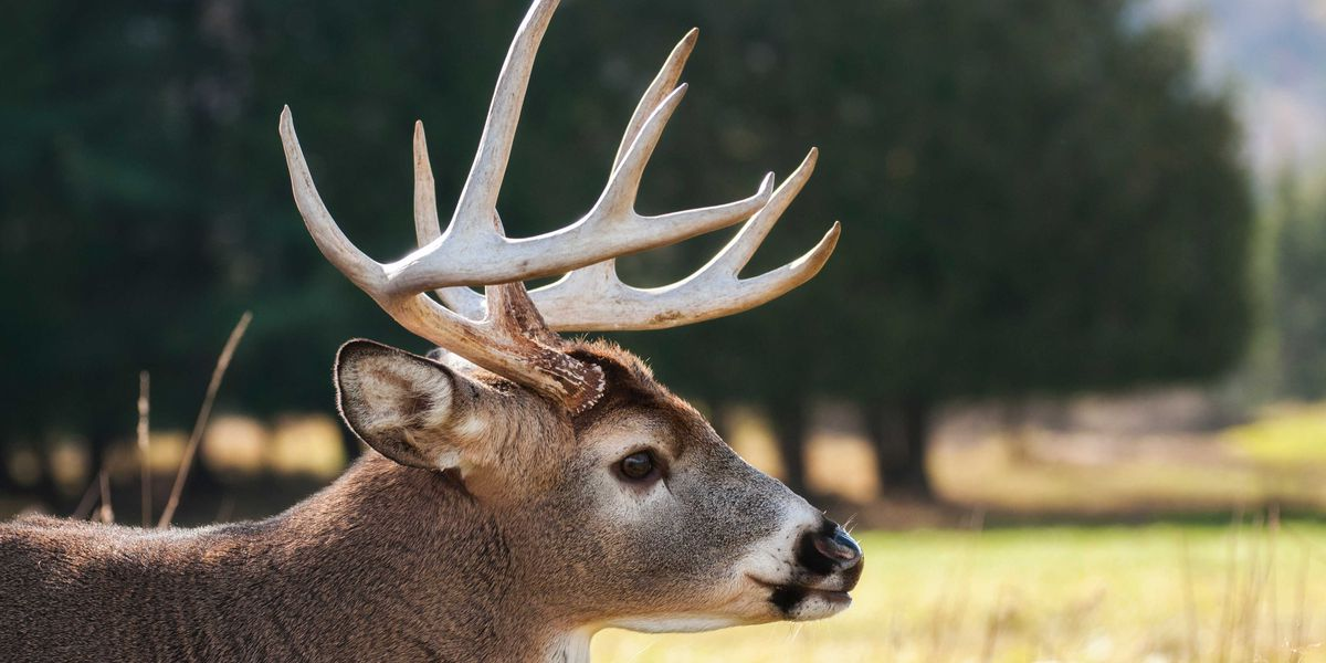 Possible Chronic Wasting Disease cure found at LSU