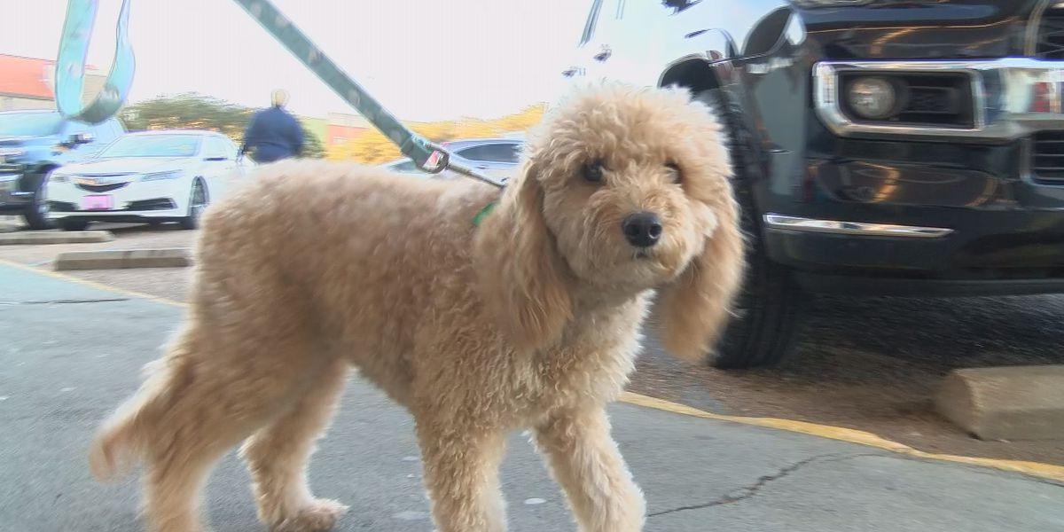 Health Department now allows dogs on restaurant patios under certain restrictions