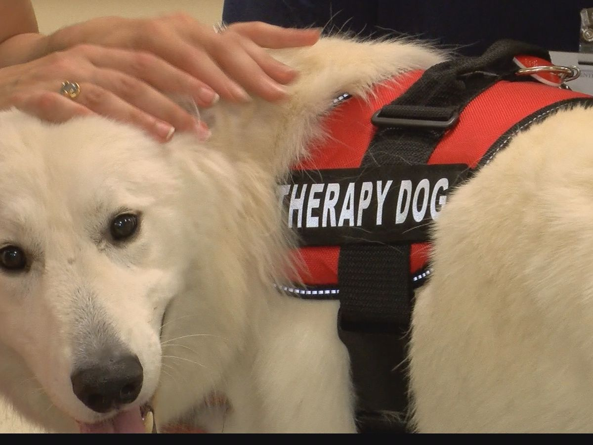 Therapy pups bring comfort to UMMC patients