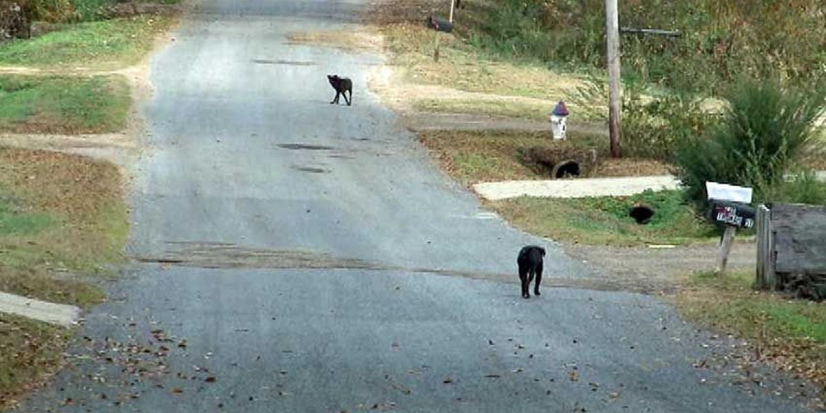 Animal ordinance changes proposed for Madison county