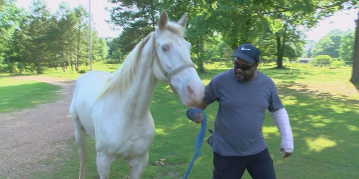 Hinds County man injured when horse he is riding is attacked by dog