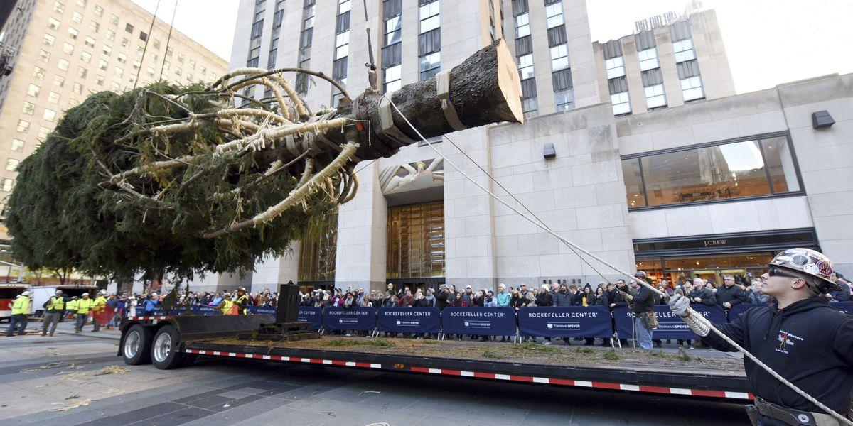 New York City's Rockefeller Center Christmas tree goes up