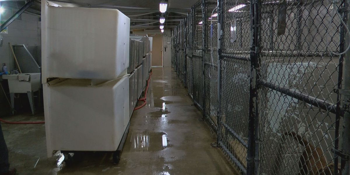 New animal shelter could soon be in works for City of Vicksburg