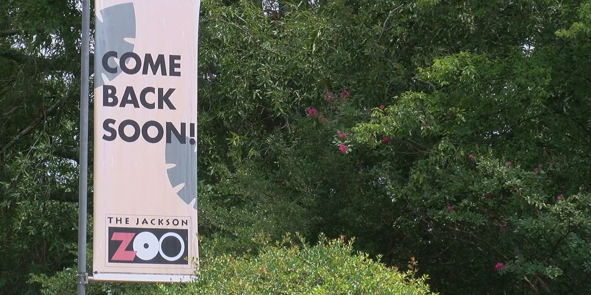 City of Jackson begins negotiations with Dubai company approved to operate zoo