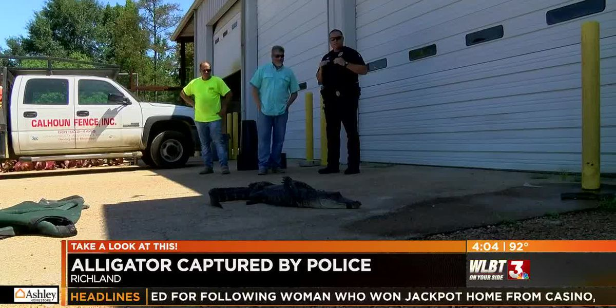 Richland police capture alligator in parking lot