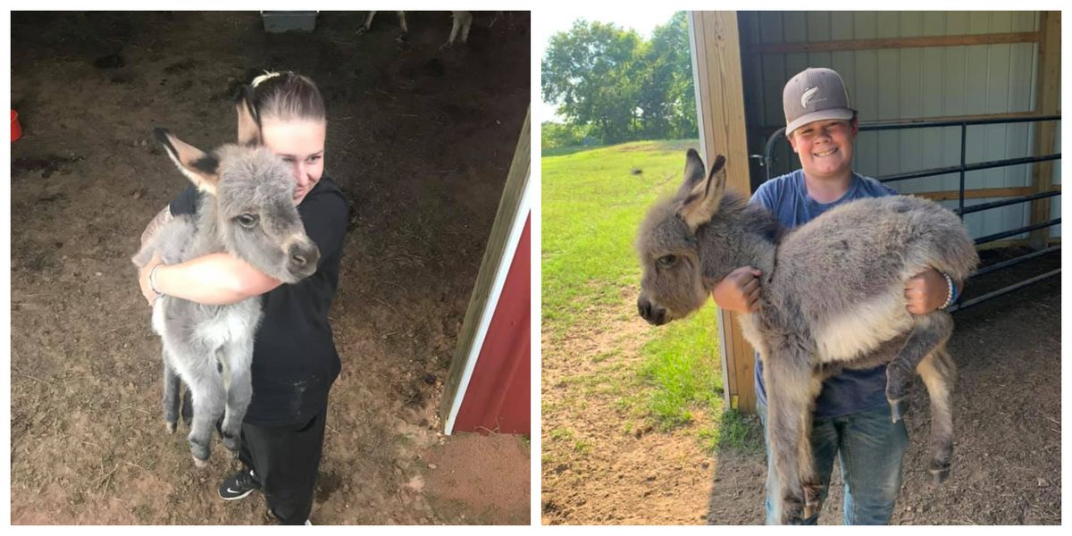 'Kind of sadistic': Miniature donkeys killed in Smith Co. pasture cause frightening mystery for owners; reward for info raised to $7,000