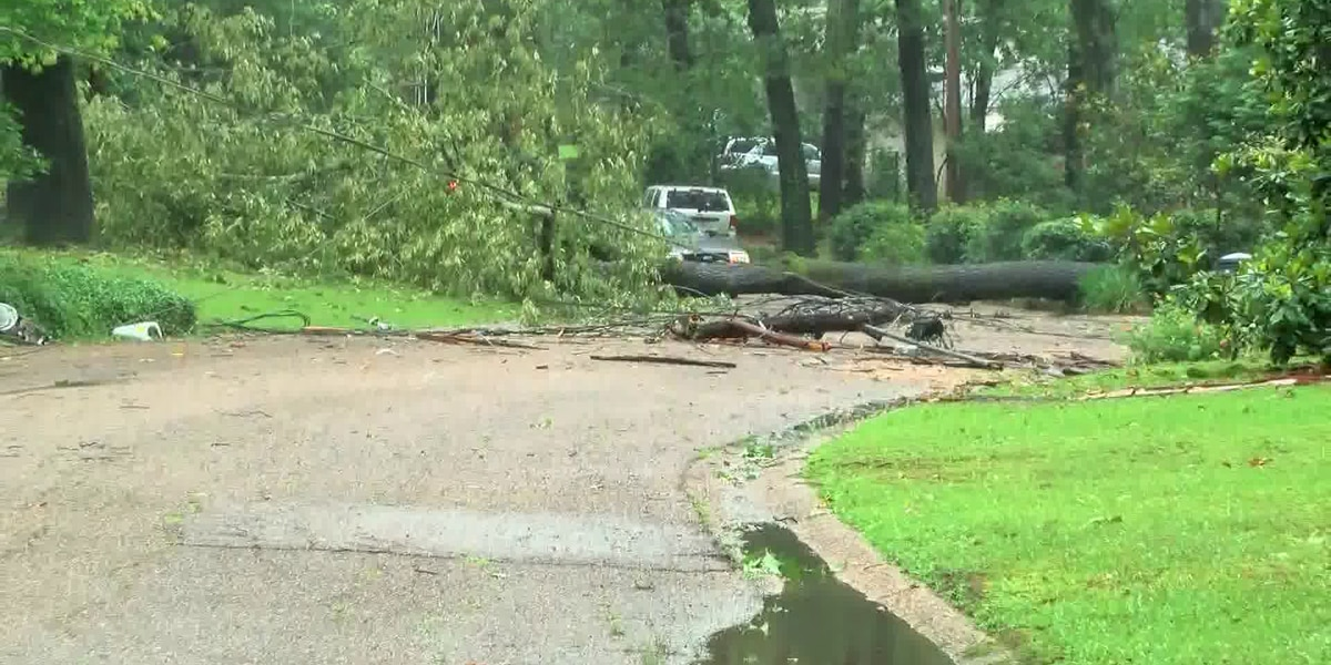 Strong winds knock down trees, power lines