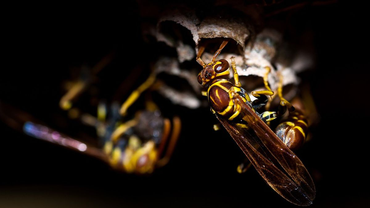 Officials: Getting high on wasp spray can kill you
