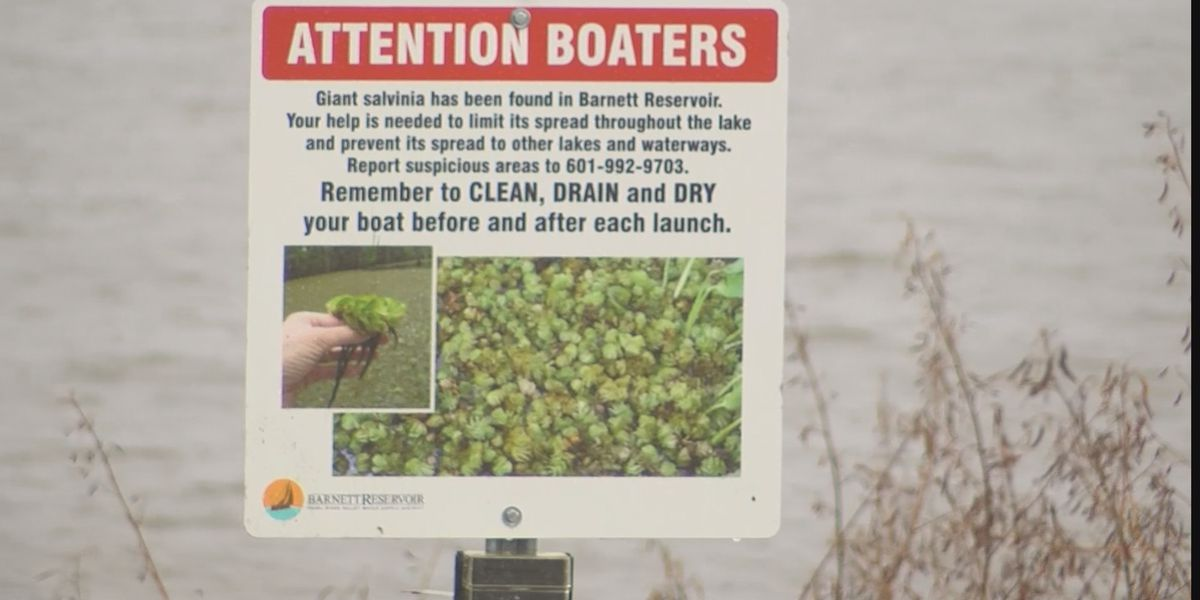 Officials consider lowering Reservoir water levels in ongoing fight against the Giant Salvinia