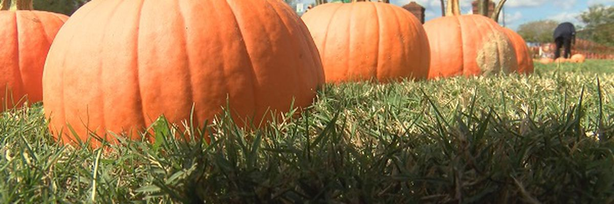 MISSISSIPPI WEEKEND: Haunted Houses, Pumpkin Patches & Spooktacular Events in Jackson