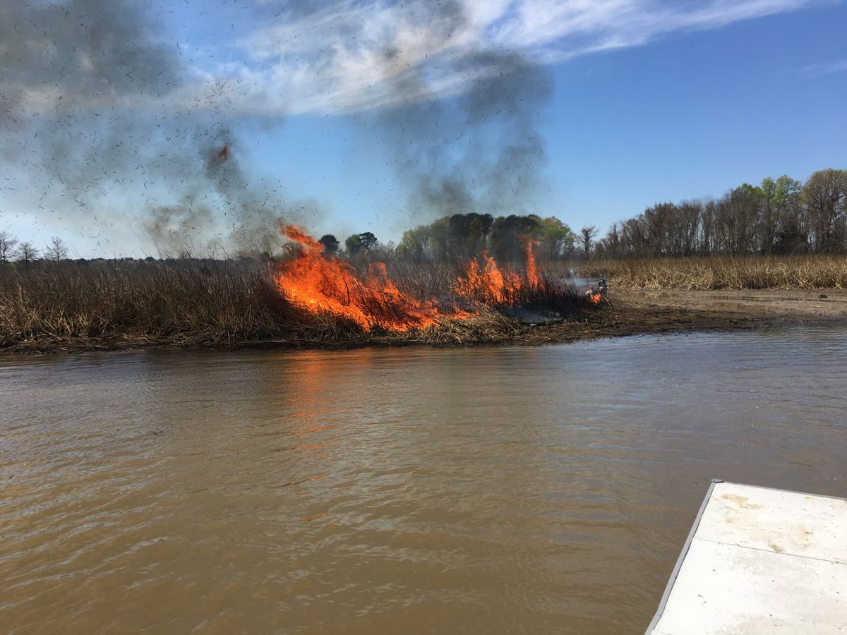 Flamethrowers used in giant salvinia fight at Pelahatchie Bay