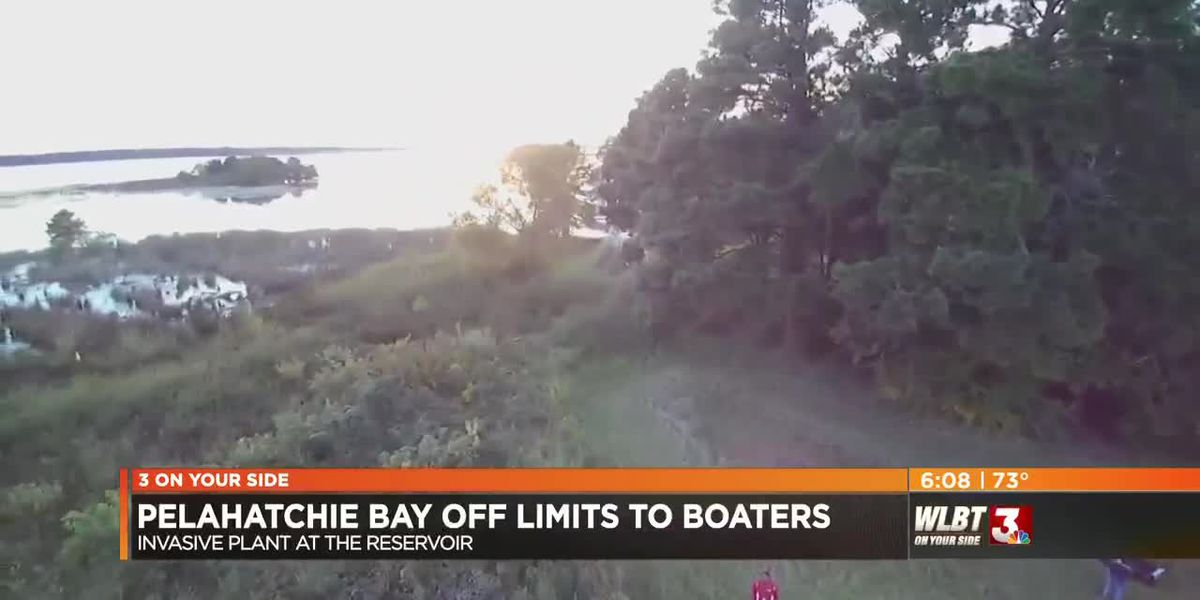 VIDEO: Giant salvinia emergency calls for boating ban in Pelahatchie Bay