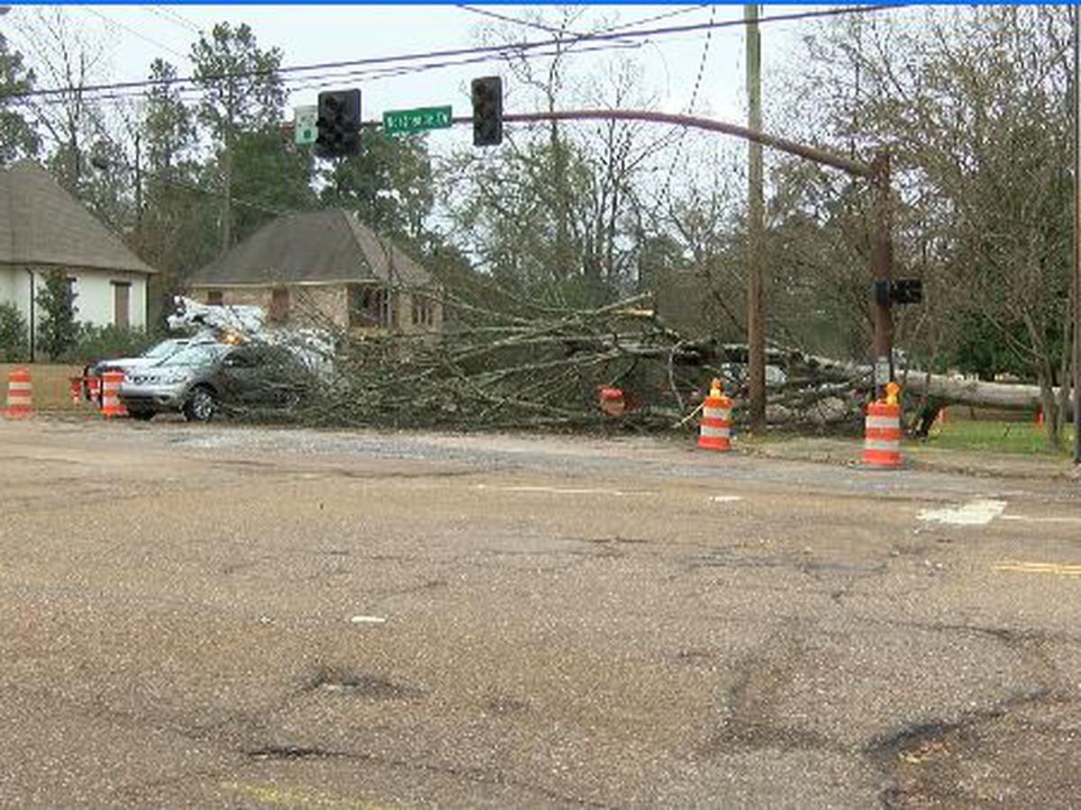 Fallen tree stalls traffic at intersection