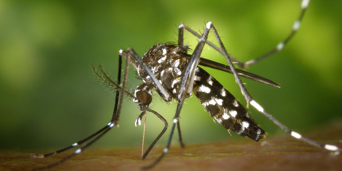 West Nile hits Louisiana, with 9 confirmed infections