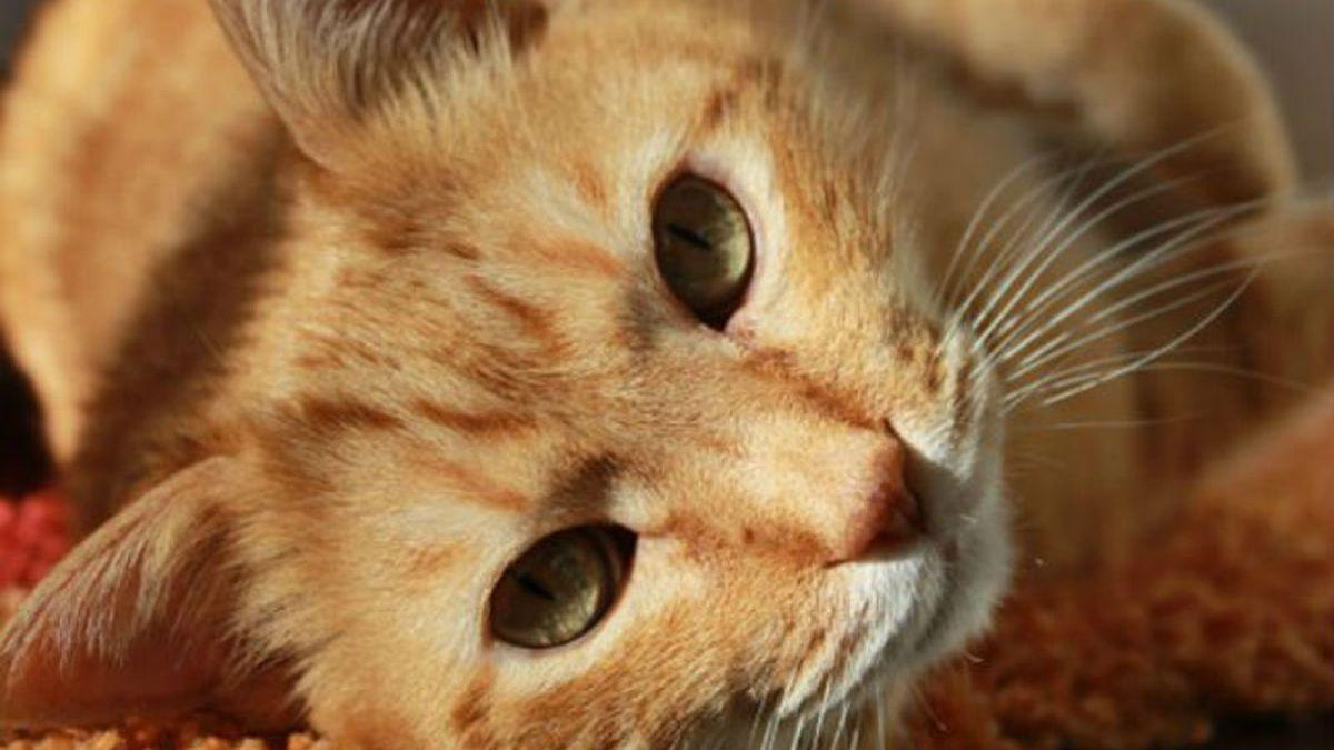 CARA releases statement on cat virus outbreak