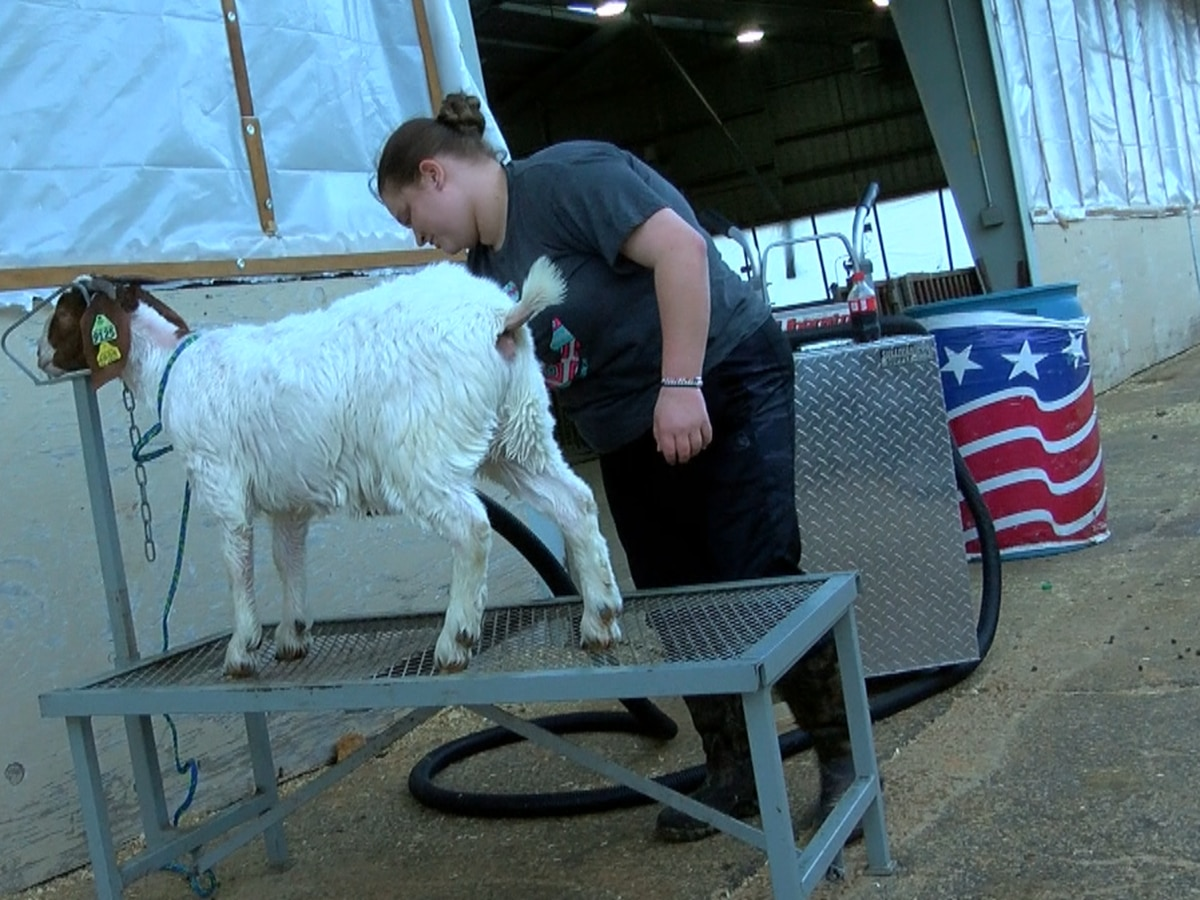 4-H preparing kids for more than raising farm animals