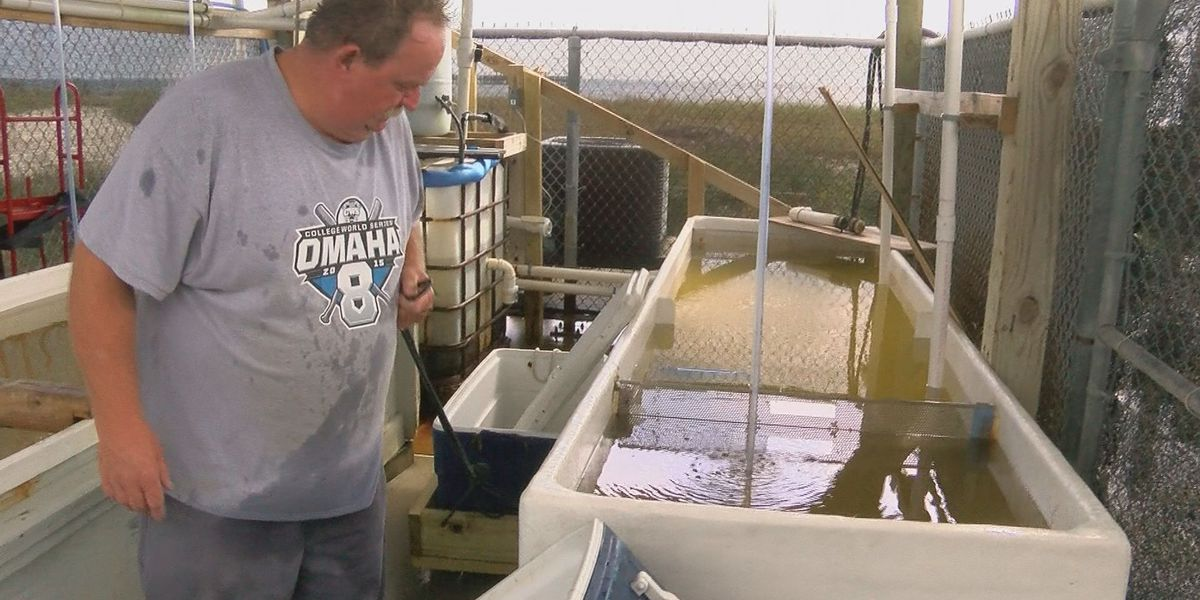 Gulfport Harbor busy with preparations as Hurricane Zeta approaches